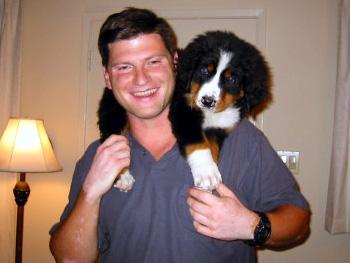 Life With Arthur The Chocolate Schnauzer Puppy Dog